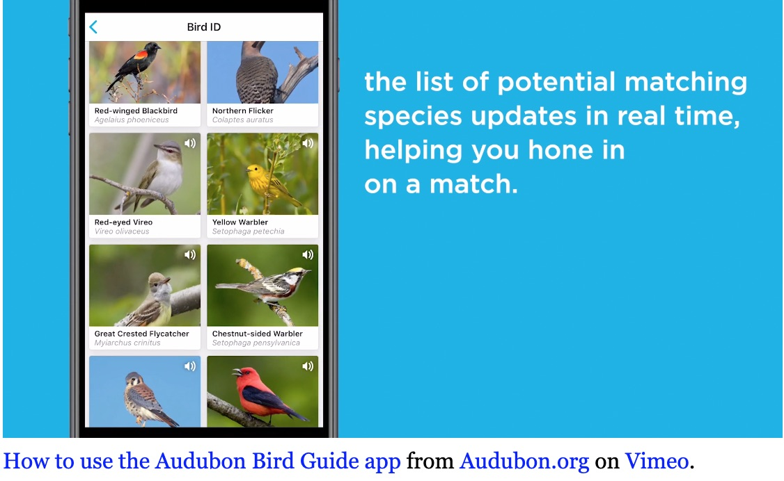 Audubon App