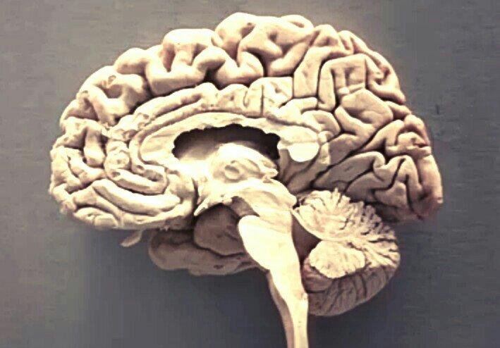 Brainpage