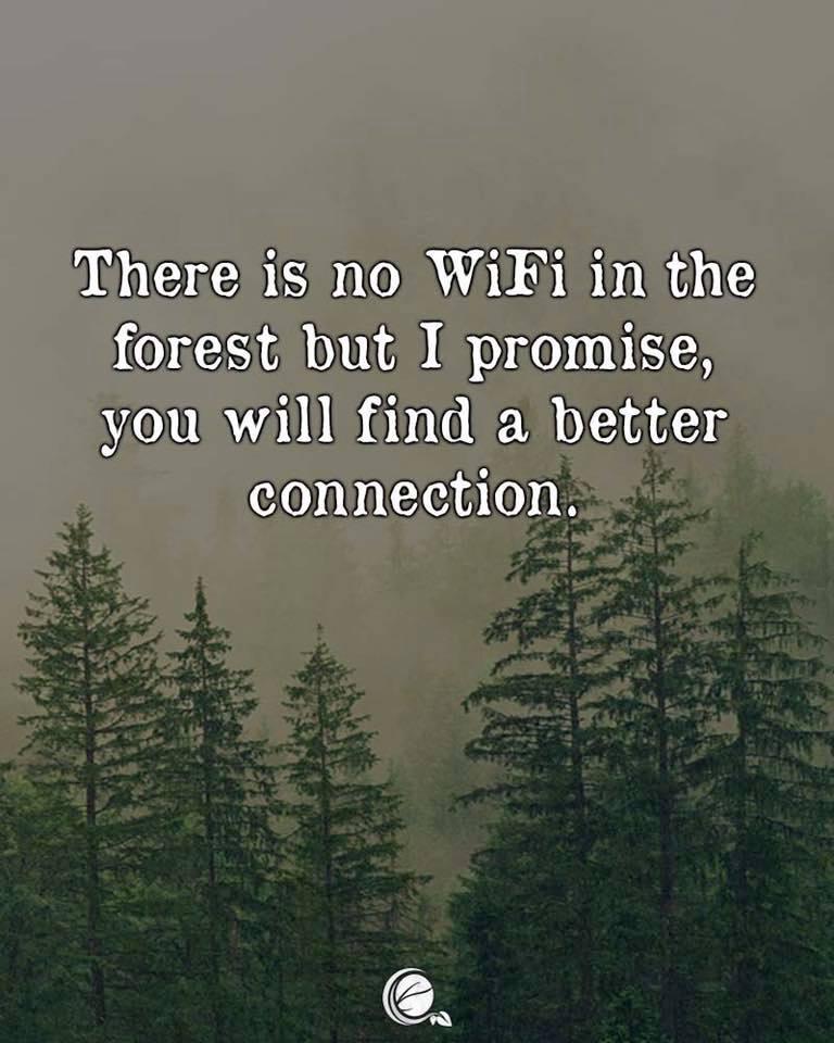 Forrest WiFi