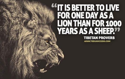 Live like a lion